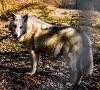 Zoo Sibiu are trei noi locuitori