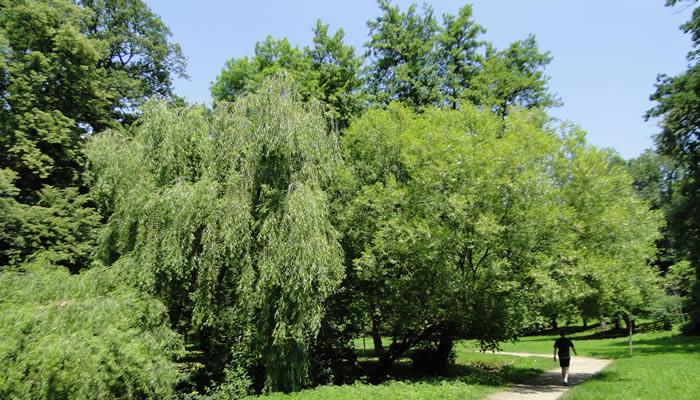 Parcuri și Zone Verzi