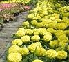 Plantările de primăvară continuă în parcurile şi zonele verzi din Sibiu